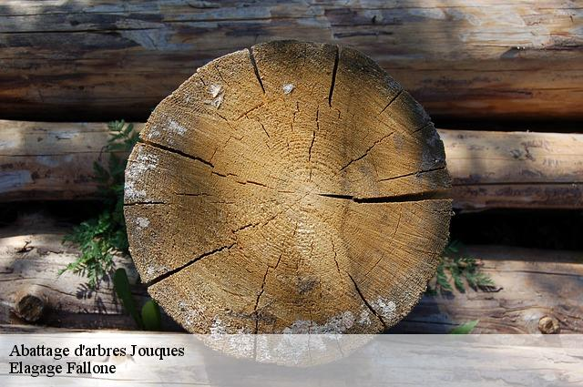 Abattage d'arbres  jouques-13490 Elagage Fallone